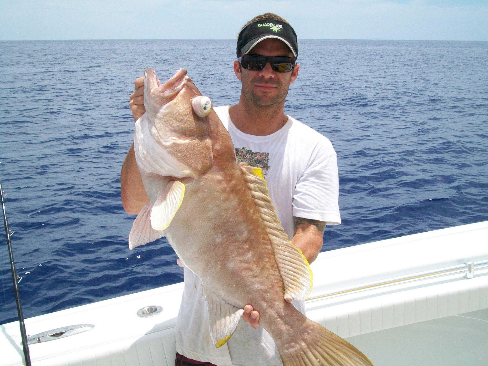 yellow edge grouper