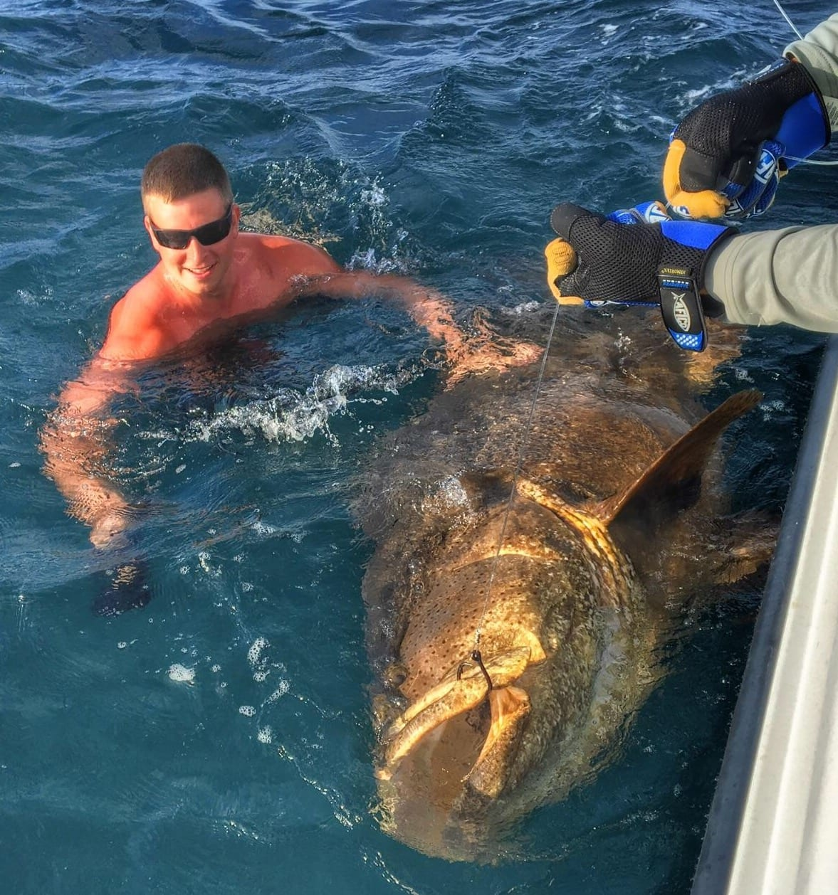 Goliath Grouper Fishing in Clearwater