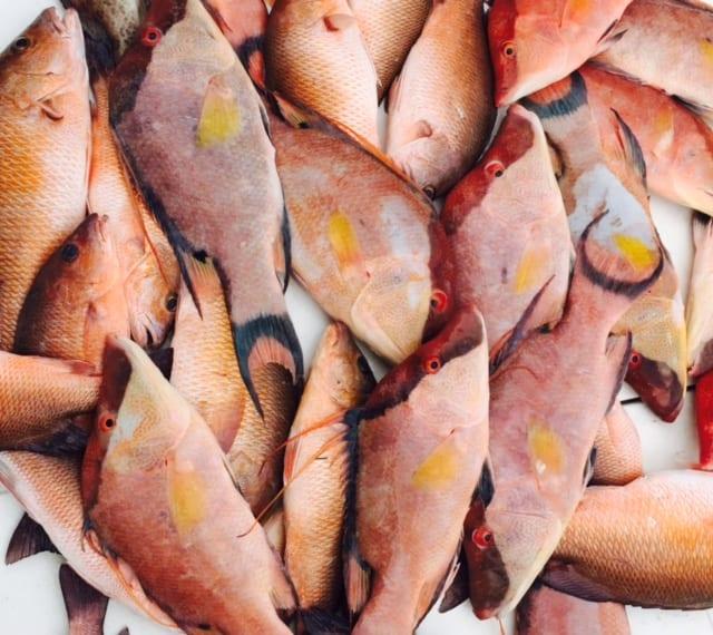 Fresh Hogfish for dinner