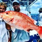 American Red Snapper