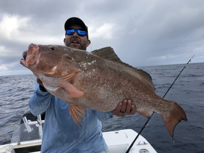Red Grouper